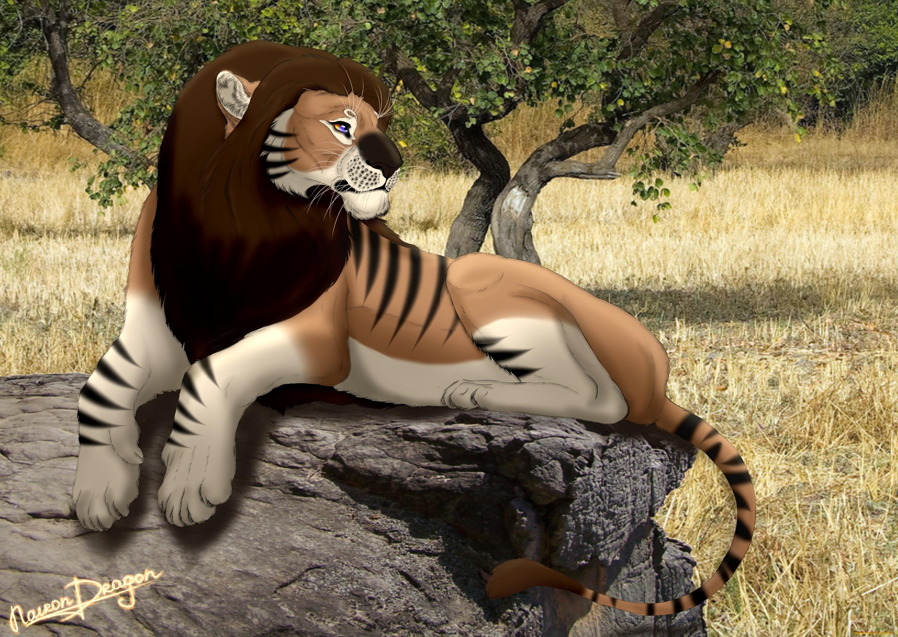 рисованное, животные,  львы, взгляд, лев